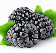 黑色桑葚水果高清图片下载